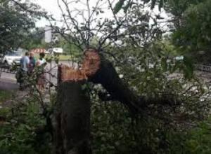 У Перечині на житловий будинок впало дерево