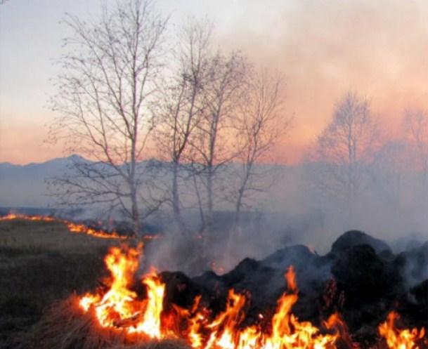 Токсини, які виділяються під час горіння рослин та інших речовин, провокують виникнення хвороб, зокрема, дихальної системи.