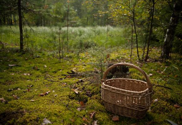 Закарпатка пішла шукали гриби та заблукала в іншій області