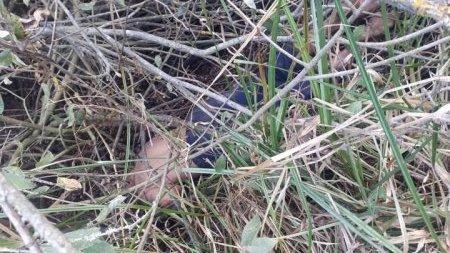 У вівторок, 8 жовтня, у смт Вилок, що на Виноградівщині, виявили труп людини.