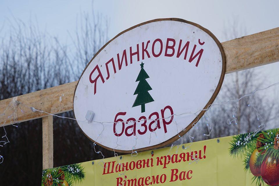 Лісівники Закарпаття оголосили кількість зрубаних ялинок.