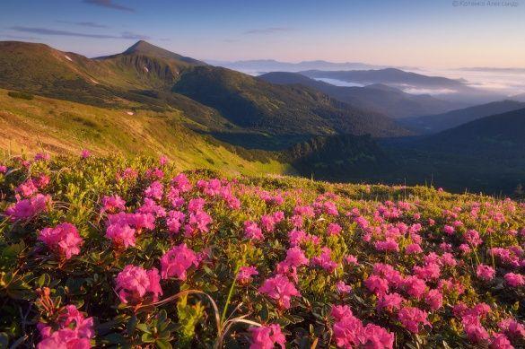 Температура повітря вночі 5-10°, на високогір'ї 1-3° тепла, вдень 14-19°, в горах місцями 5-10° тепла.