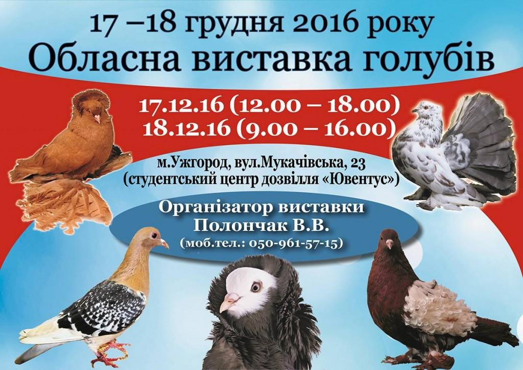 В Ужгороді відбудеться виставка декоративних голубів
