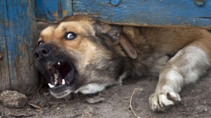 Мужчина убил животное палкой, потому что хозяин пожаловался на это.