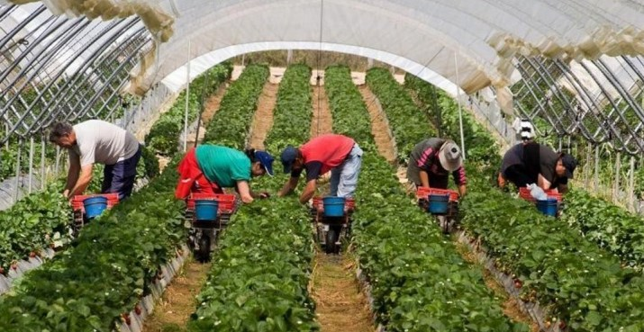 Для українських трудових мігрантів і підприємців планують створити привабливі та комфортні умови праці.