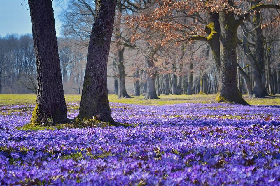 Фотограф зробила унікальні знімки квітучих Карпат