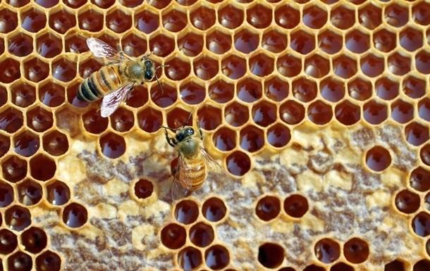 Минулого року Україна поставила за кордон 81 тисячу тонн меду, що стало абсолютним рекордом.