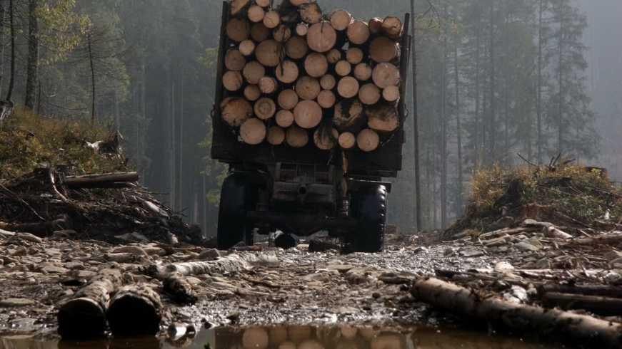 Обвинительное заключение в отношении 3 должностных лиц одного из лесохозяйственных хозяйств государственного предприятия