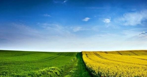 За даними Центрального статистичного управління в минулому році було продано 1% сільськогосподарських і лісових угідь.
