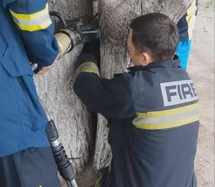 Ногу дитини, яка застрягла між двома деревами, змогли звільнити тільки рятувальники за допомогою гідравлічних ножиць.