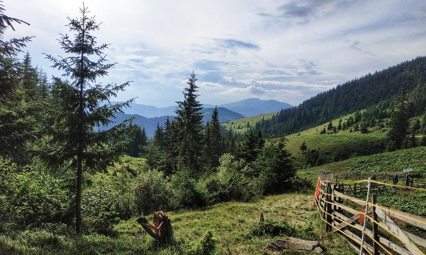 Електрична огорожа для відлякування вовків встановлена на полонині Шумнєска на Рахівщині — близько 1300 метрів над рівнем моря.