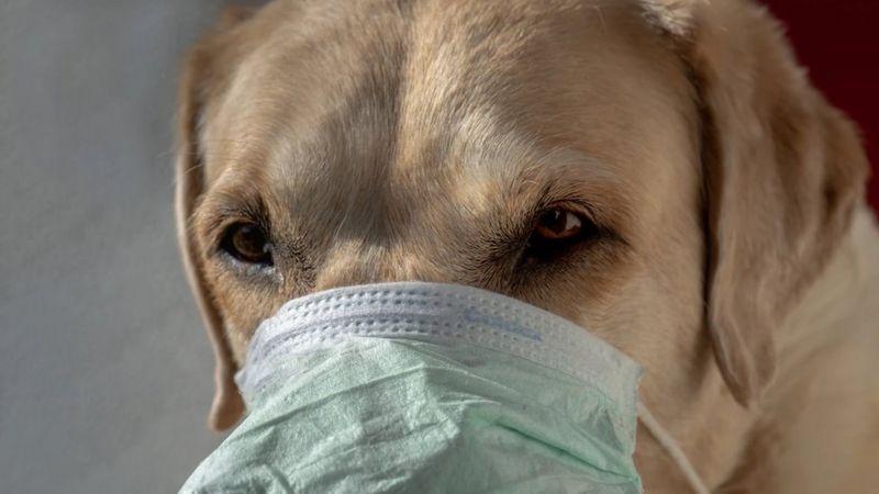 С самого начала пандемии эксперты беспокоились о том, как коронавирус повлияет на животных.