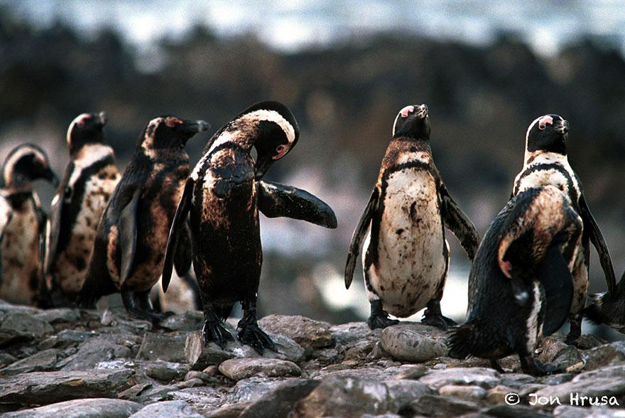 Людство знищило 60% чисельності тварин на Землі