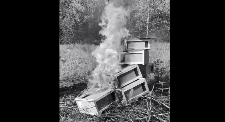 Перипетії з закарпатськими бджолами на слуху в усієї країни уже який день, то вони усі померли, потім наче ожили, а тепер їх спалили.