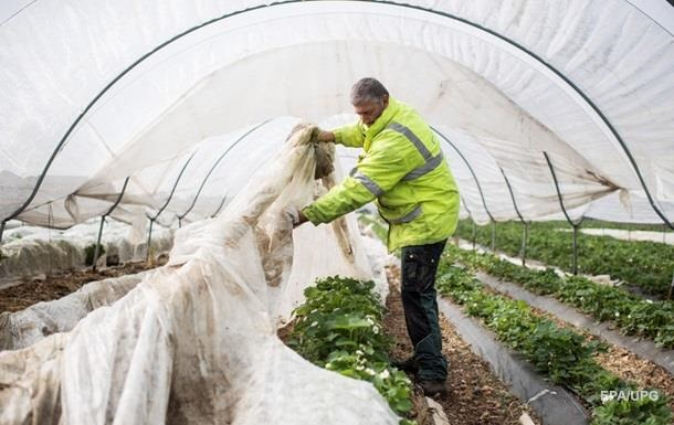 У країні не вистачає робочої сили, аби впоратися із сільськогосподарськими роботами, і польські фермери ризикують втратити урожай.