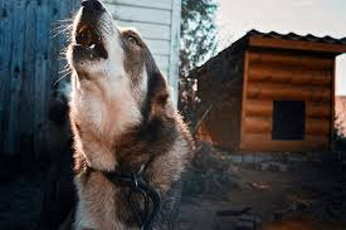 Ветеринари обстежують дрібних домашніх тварин у Виноградові, чи бува не скажені