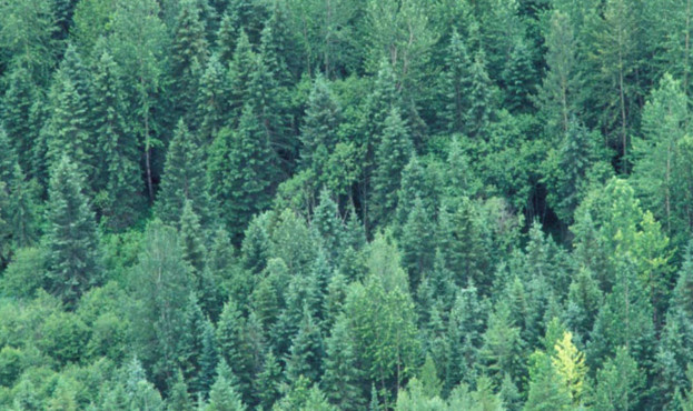 Межі природно-заповідного фонду Закарпаття збільшилася на 223 гектари.