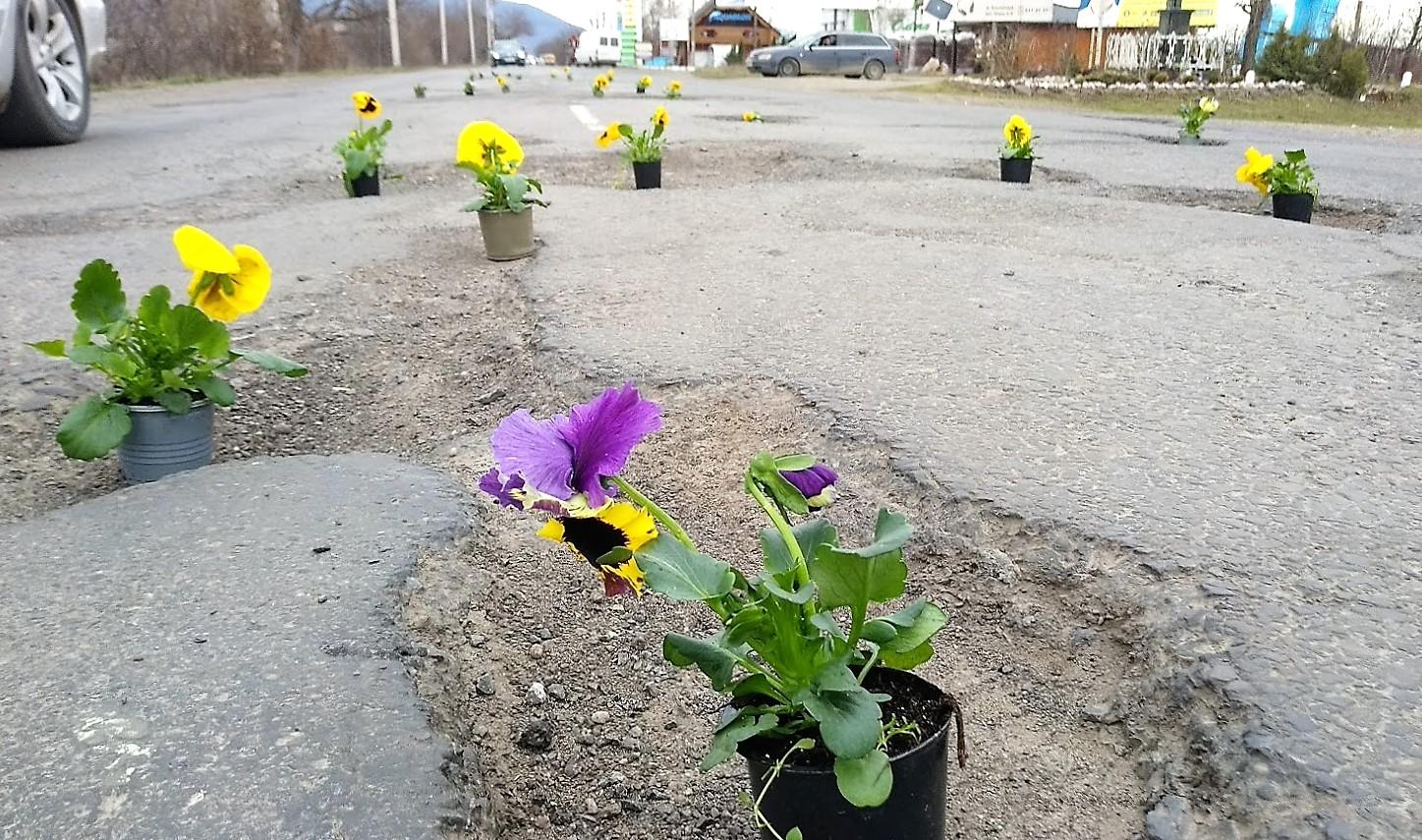 Фото 3 - На Закарпатті ями на дорогах по маршруту Порошенка прикрасили квітами у вазонах (ФОТО)