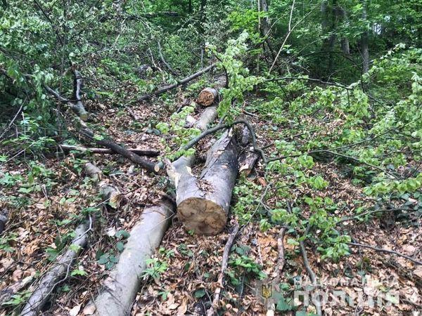 В Перечинщине милиция направила в суд обвинительное заключение по делу о незаконной вырубке лесов в заповеднике.