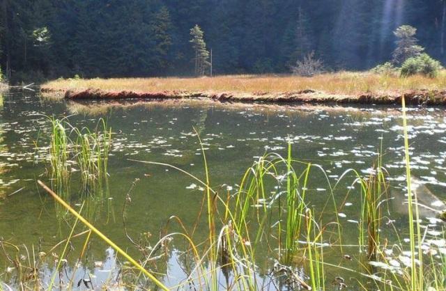 Дике Озеро