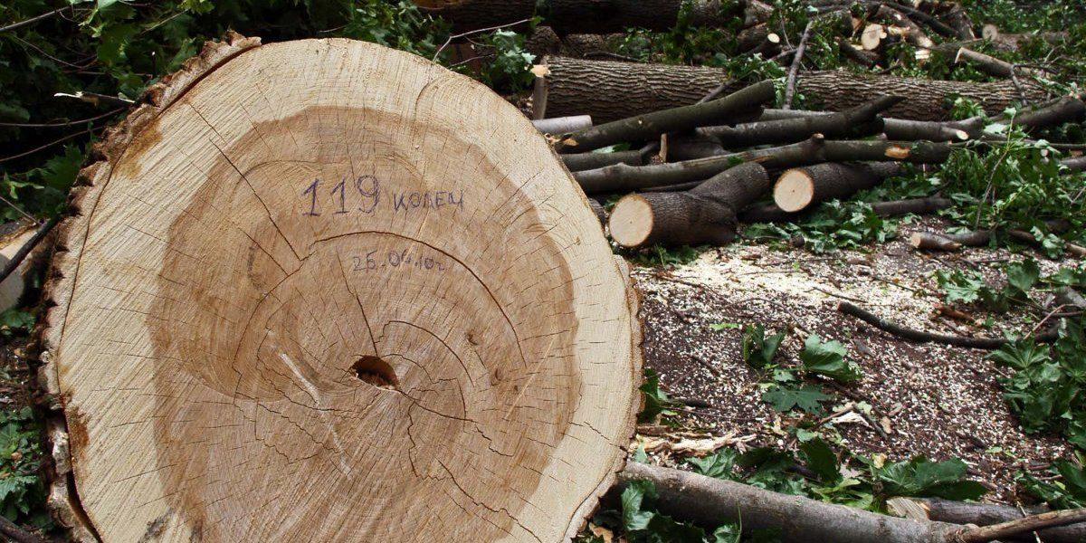 Мешканець Хустщини відповість перед судом за незаконну рубку дерев зі збитками у 347 тис. грн.