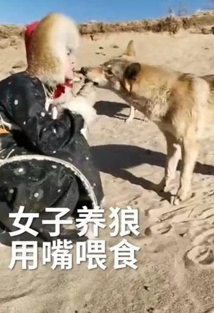 Китаянка прославилася, годуючи вовків з рота (ФОТО)