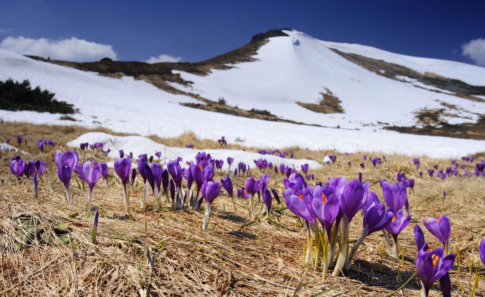 Температура повітря вночі 0-3° морозу, в горах до 5° морозу, вдень 9-14°, в горах місцями 2-7° тепла.