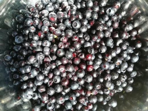 На Закарпатті стартувала пора яфин. Наразі ягоди збирають на полянах неподалік сіл, де вони вже дозріли.