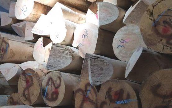 Приватний підприємець із Житомирщини спробував вивезти до Сербії деревину.