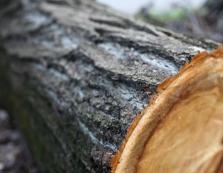 Прокуратура домоглася в суді відшкодування близько 50 тис грн збитків віж незаконної рубки дерев на Міжгірщині