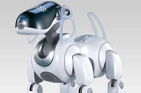 Дослідники з Лабораторії соціальної робототехніки Єльського університету представили доповідь про те, як собаки реагують на команди роботів.
