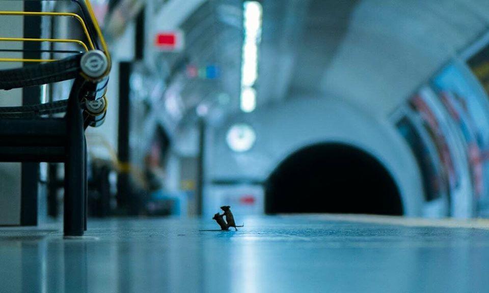 Переможцем конкурсу Лондонського музею природознавства LUMIX People's Choice Award став британець Сем Роулі, якому вдалося зафіксувати бійку мишей за крихти їжі в лондонському метро.