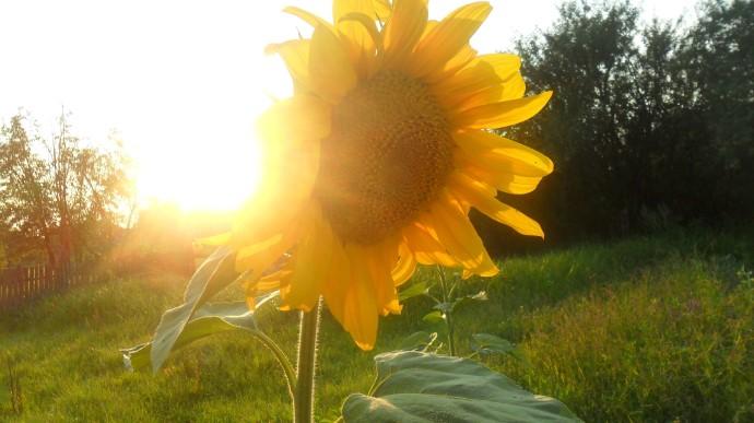 Впродовж тижня на Закарпатті очікуємо теплу, мінливу погоду.