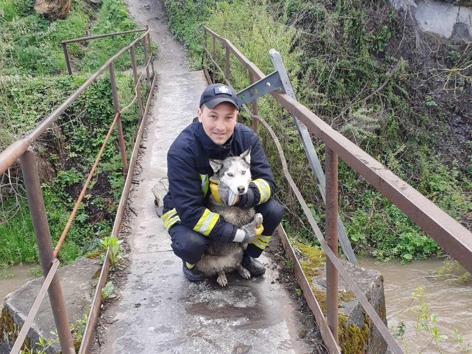 Сьогодні зранку на спецлінію 101 зателефонували місцеві жителі Воловця та попросили допомогти врятувати цуценя хаскі, що сидить на острівці підмостової опори через річку Вича.