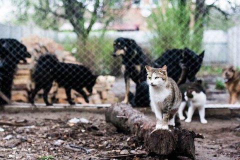 Щомісяця в ЄС продається 46 тис. собак, більшість з яких не мають належної реєстрації.