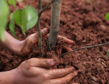 Закарпатські держлісгоспи приділяють велику увагу екологічній освіті юного покоління