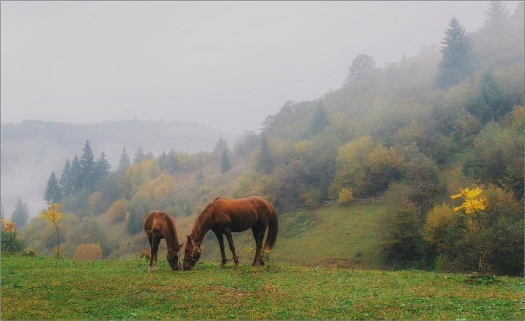 Міжгірські лісівники активно розвивають туризм