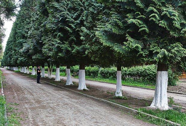 Закарпатською обласною прокуратурою скеровано до суду обвинувальний акт щодо двох осіб, дії яких призвели до відчуження комунального майна на території Боздоського парку.