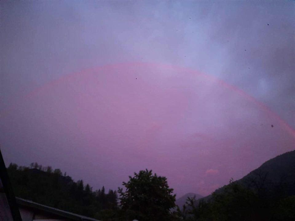 На тлі фіолетового неба видно рожеве напівколо. Всередині кола - силует дерева.