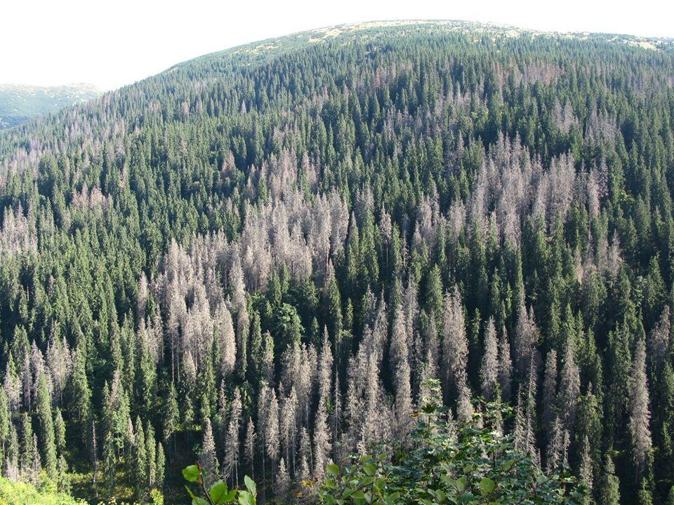 Що це – вплив кліматичних змін чи людини? А найголовніше: що з цим робити?