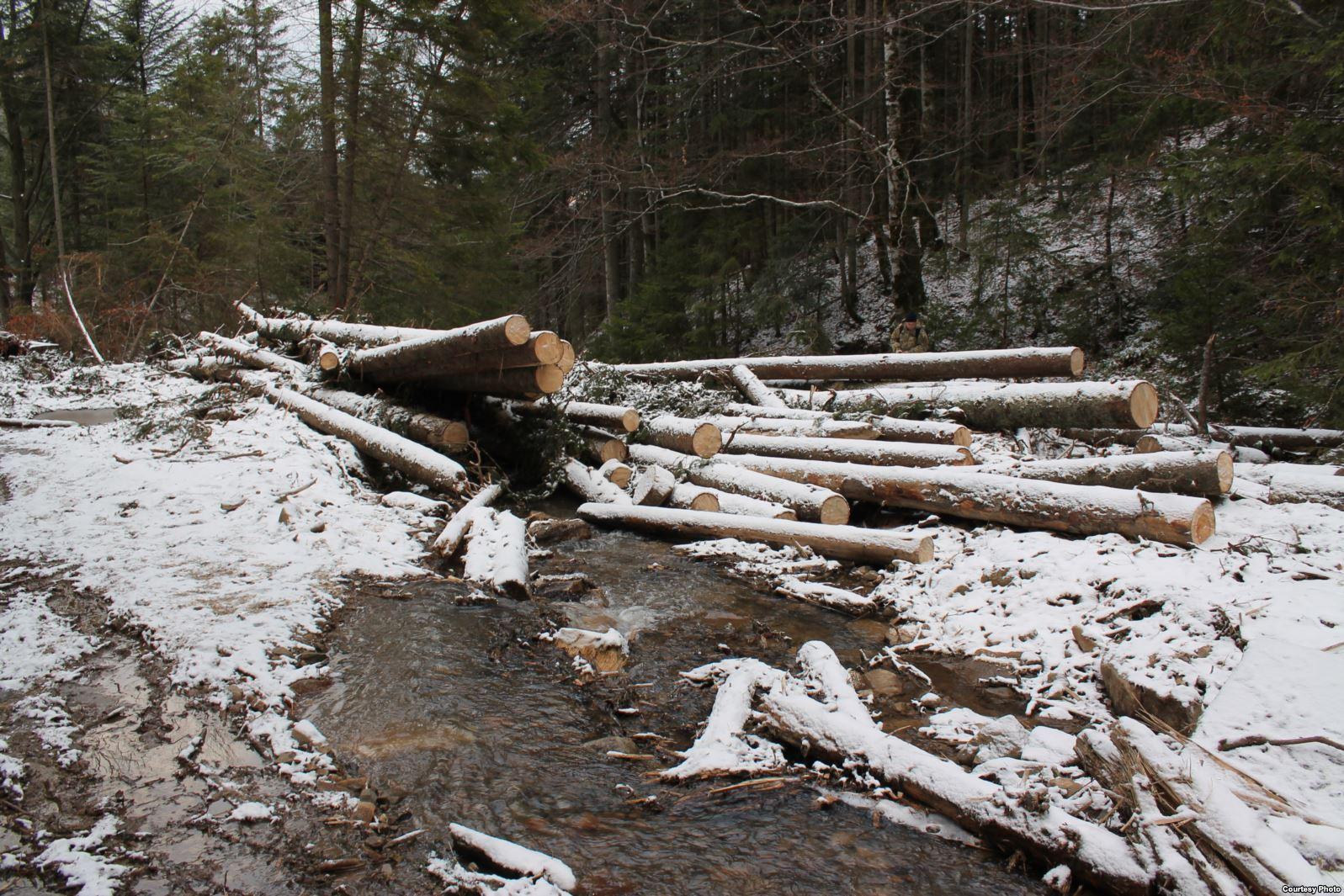 На Закарпатті за незаконні рубки на понад 1,6 млн гривень судитимуть майстра лісу. Про це повідомляє речниця Закарпатської прокуратури Катерина Хижняк.
