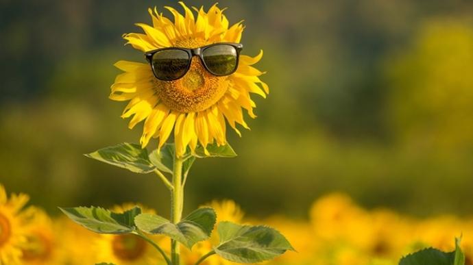 Літня спека від +30 градусів прийде в Україну не раніше липня. Наступного тижня в країні очікується +20 ... + 25 градусів.