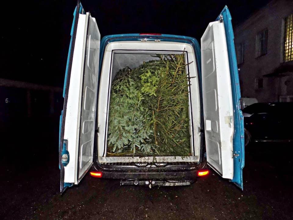 Працівники Міжгірського відділення поліцїі виявили два вантажні мікроавтобуси, на яких нелегально перевозили близько 200 ялинок.