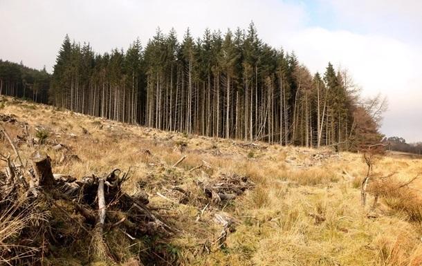 Арбітражна група в Швейцарії визнала законне обмеження України на експорт деревини.