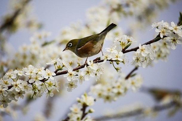 У квітні відзначають багато свят, проте жодне з них не є офіційним вихідним днем.