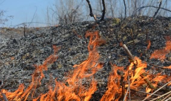 На Закарпатті під час спалювання сухої трави травмувався чоловік