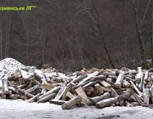 Лісівники Великоберезнянщини отоварюють краян паливними дровами