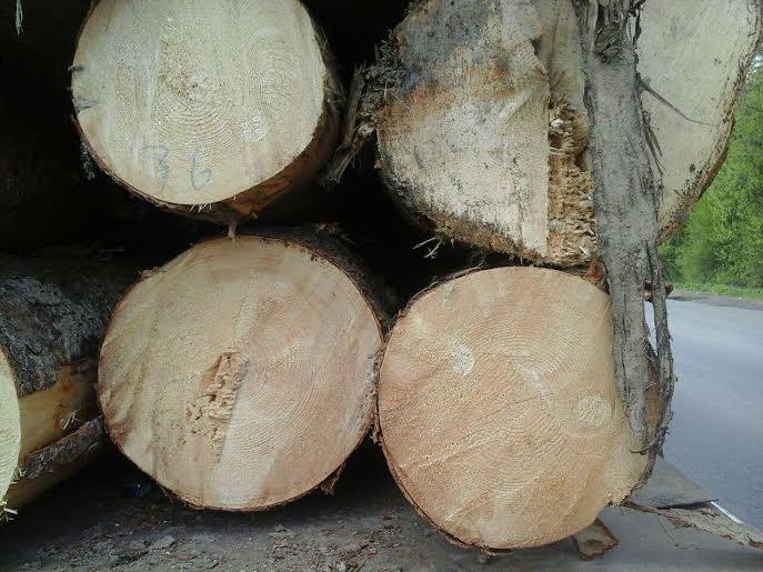 В селе Велики Березное инспекторы патрульной полиции остановили грузовик с деревом. В ходе проверки документов выяснилось, что в них были обнаружены признаки подделки документов.
