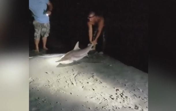 У США чоловік відтягнув за хвіст живу акулу