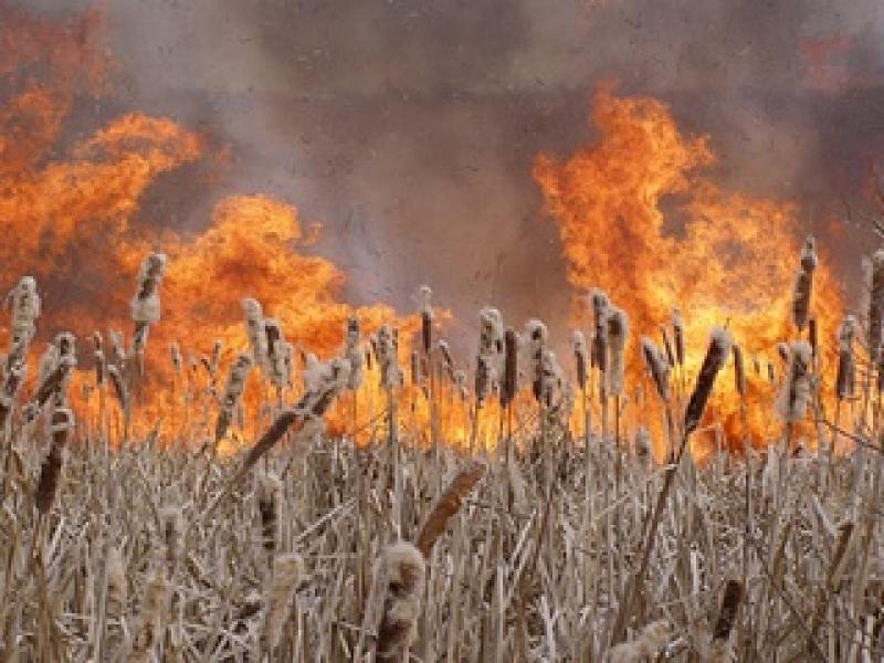На Закарпатті оголосили високу пожежну небезпеку